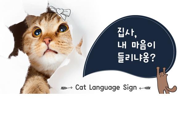 """""""내 마음이 들리냐옹?"""" 몸으로 말하는 고양이 언어"""