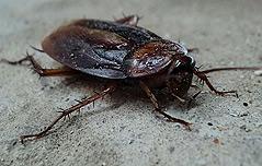 `두통` 40대女 머릿속 <br>살아 있는 바퀴벌레
