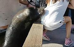 바다사자의 `습격` <br>7세 소녀 끌고 들어가