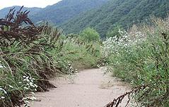 4대강 `유령`공원들 <br>…관리비만 줄줄 새