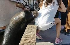 바다사자에 물린 소녀 <br>박테리아 감염병 치료