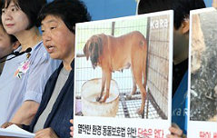 """우리에 갇혔다가 도살 <br>…""""개농장 폐쇄해야"""""""