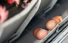 계란서 파킨슨병 유발 <br>물질 `피프로닐` 검출