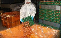 `살충제 계란` 13개 <br>농가서 추가 검출