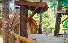 MS 직원들을 위해 <br>자연속 나무집 건설