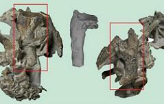 길이177cm·체중101kg <br>고대 펭귄 화석 발견