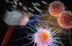 암세포 성장 유도하는 <br>특수 유전자 `토르`