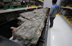 천연기념물센터에<br> 10m 나무 화석 있다