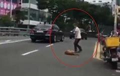 탈출한 개 도로서 학대<br> 벌금 100만원 선고