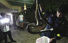 태국 방콕에 뱀·쥐<br> 득실…왜?