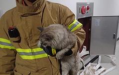 늦은밤 빈집서 발생한<BR> 화재 범인이 고양이?