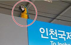 검암역, 앵무새 소동<br> 주인과 극적 상봉