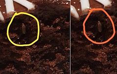 이케아 매장 음식서<br> 잇따른 벌레 발견