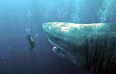 고대 바다의 공포<br> 메가로돈 멸종한 이유