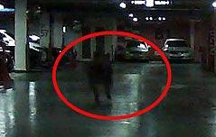아파트 주차장에 나타난 대형 멧돼지