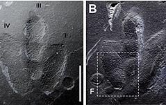 진주서 소형 공룡 피부 자국 화석 발견