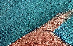 유화 표면 미세 돌출부 찾는 장비 개발