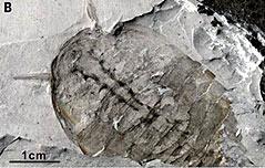 단수이강서 5억년전 캄브리아기화석군 발굴