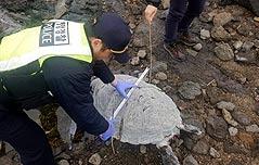 제주서 멸종위기종 푸른바다거북 사체 발견