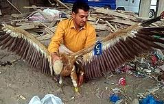 예멘전장서 체포된 불가리아 독수리의 모험