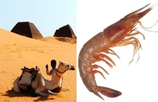 [S. Korea Takes Part in Shrimp Farming Project in Sahara Desert] ����� ���� �̹���