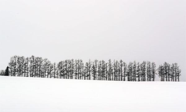 설산의 겨울나무들