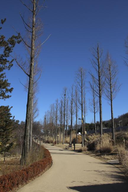 렌즈에 담는 늦겨울 정취 - 항동철길과 푸른수목원