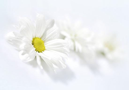봄에 대한 이미지 검색결과