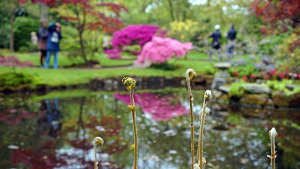 [지구촌 포토기행] 유럽 속 작은 일본 - 헤이그 'Japanese Garden'