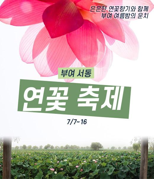 [카드뉴스] 은은한 연꽃향기 가득 - 부여 '서동 연꽃축제'