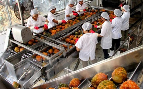 Việt Nam's fruit and vegetable exports reached a record $3.5 billion for year-on-year growth of 43.02 per cent, according to the Ministry of Agriculture and Rural Development.