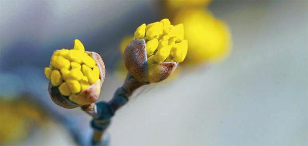 어느덧 찾아온 봄