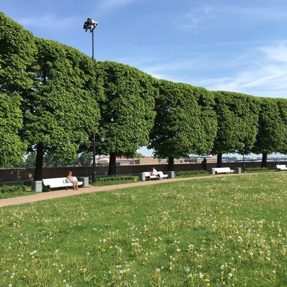 상트페테르부르크의 한 공원. 사람들이 벤치에 앉아 책을 읽고 있다.