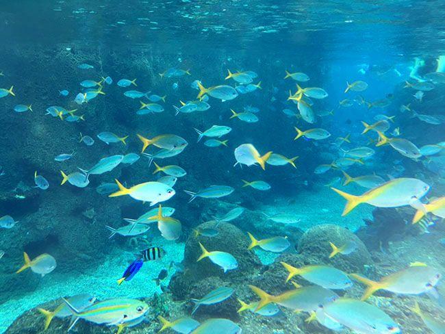 레인보우 리프에서 물고기들이 자유롭게 헤엄치는 모습. 스노클링 장비와 구명 조끼 모두 무료로 빌려주는데, 몸을 씻고 들어가면 전체 풀을 한 바퀴 돌고 나올 수 있다.