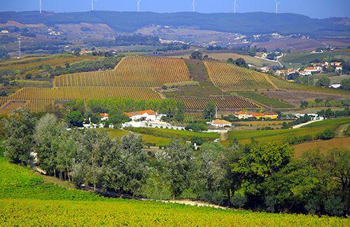 리스본 인근의 와인 산지 알렝케르 마을 풍경