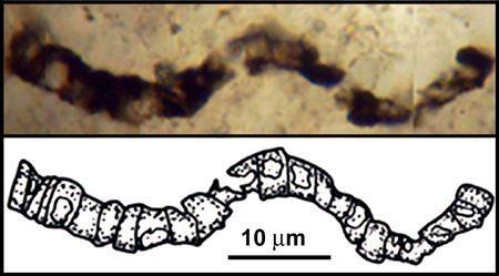 1992년 호주 암벽에서 발견된 화석의 모습. 이 구불구불한 선이 생명이 굳어서 남긴