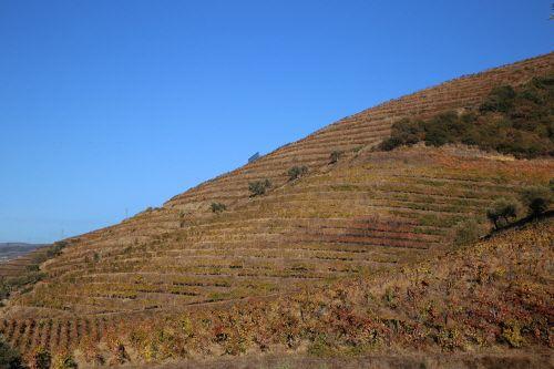 도루 계곡의 가파른 경사를 따라 계단식 포도밭이 조성돼 있다.
