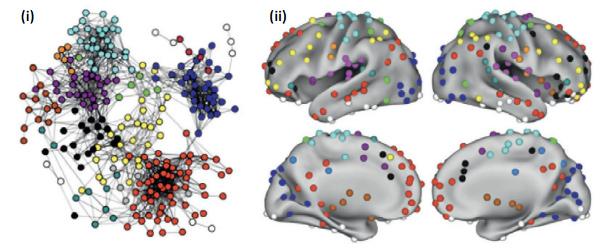 (i) 뇌 속 부위들이 연결된 네트워크의 모양. 같은 영역(module)에 속하는 부위들은 같은 색으로 표시되었다. 색이 같은 부위들 사이의 연결이 색이 다른 부위들 사이의 연결보다 더 많음을 알 수 있다. (ii) 그림 (i)의 부위들이 뇌 속에서 차지하는 위치. /사진=AK Barbey (2018) Network Neuroscience Theory of Human Intelligence. Trends in Cognitive Sciences 22:8-20.