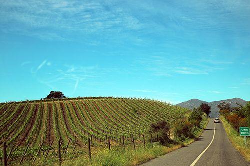 화이트 와인 명산지인 카사블랑카 밸리