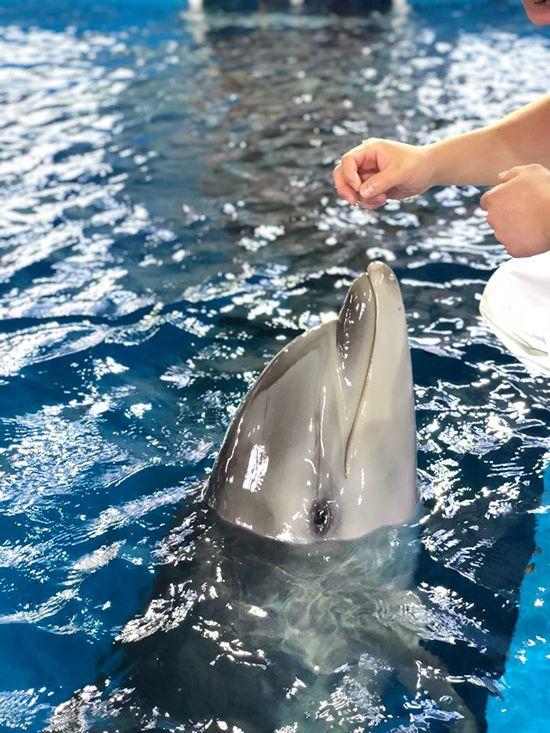 지방선거가 치러지는 13일 첫 돌을 맞는 울산 고래생태체험관 돌고래