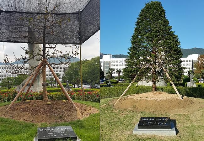 홍준표 전 한국당 대표가 도지사 재임시절 경남도의 채무제로를 달성한 기념으로 지난 2016년 6월에 식재된 사과나무. 첫