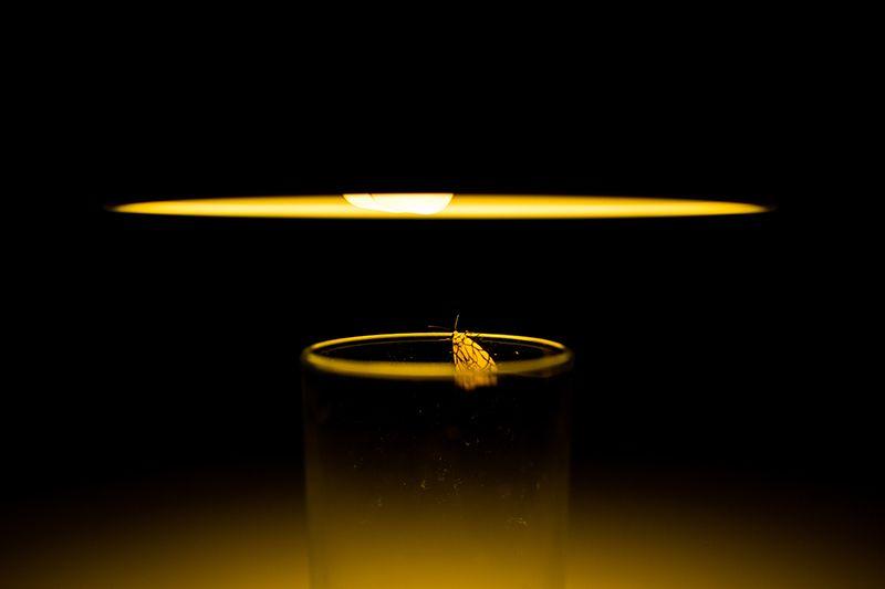 나방이 전등에 돌진하는 건 불빛을 좋아해서가 아니다. 빛과 일정한 각도를 이루며 비행하는 본능 때문이다.