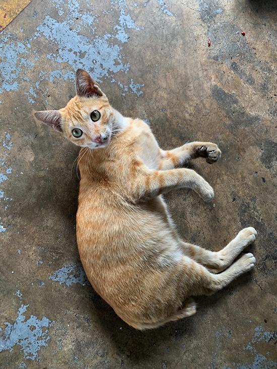 필리핀 클락공항 격납고에서 휴식을 취하고 있는 고양이. 평소처럼 평화로운 오후였다.