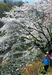 아름다운 서울 5번째 이미지