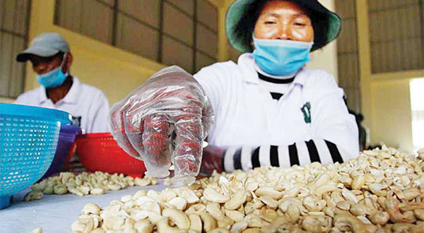 A woman performs quality checks on cashew nuts at the Cashew Nut Village Shelling Center in Kampong Thom province.