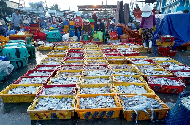 Fish caught in the central coastal province of Ninh Thuan. The total area of Viet Nam`s fisheries is set to reach 270,000ha with expected marine production of 750,000 tonnes by 2020. VNA/VNS Photo Nguyen Huu Thanh