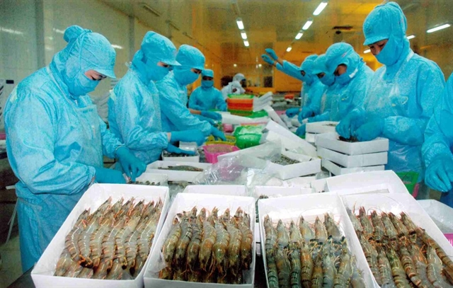 Processing shrimp for export. Viet Nam met goals of export value growth at 7.5% in 2019. Photo thegioihoinhap.vn