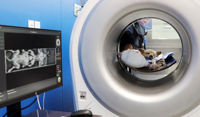 수의사가 바텍(우리엔)이 개발한 동물용CT를 이용해 반려견을 검진하고 있다.