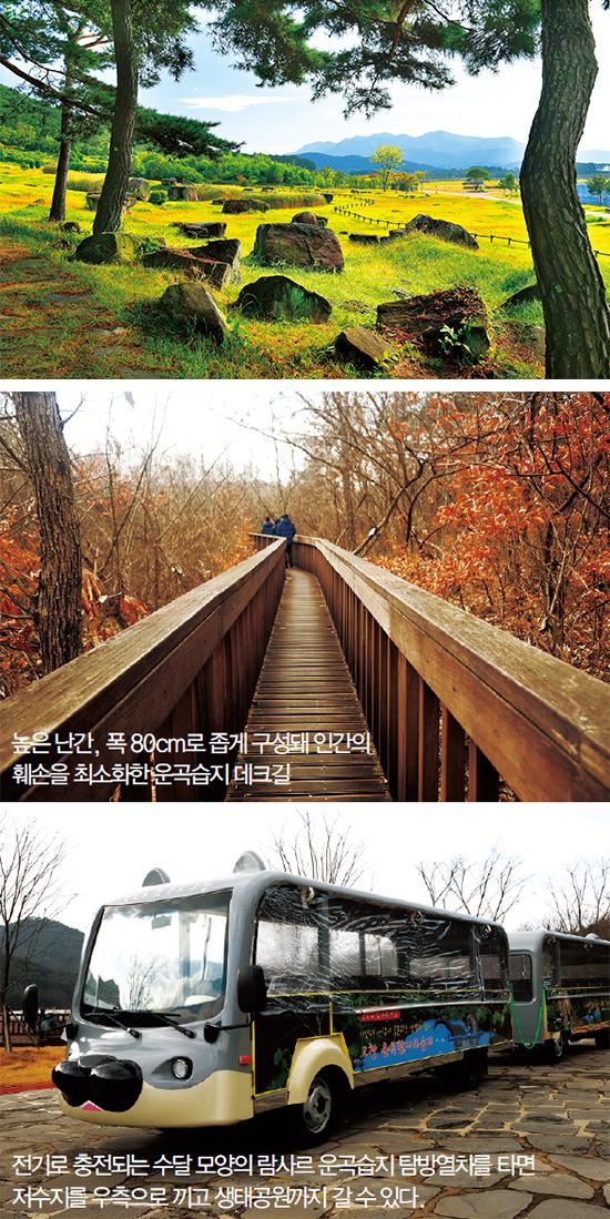 '고인돌 목장' 같았던 고창 고인돌 유적지.  고인돌이 1.8~2km에 걸쳐 조밀하게 군집해 있는 것은 세계적으로 드물다.