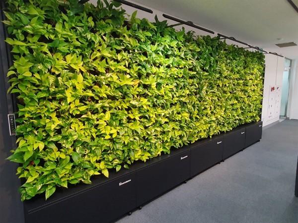 에이치엘비파워가 출시한 수직정원 `퓨어그린`이 설치된 모습. [사진 제공 = 에이치엘비파워]